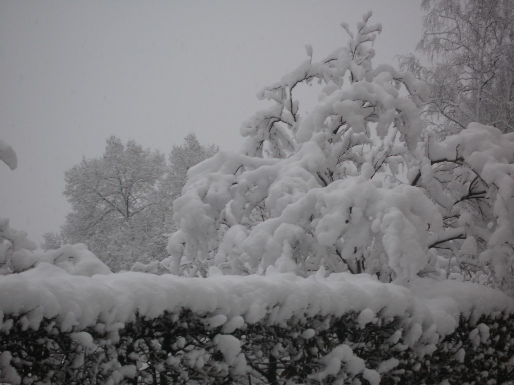 Blog Elisabeth Reinhard: Übergewicht, Untergewicht, seelische Sicht, schwer vom Schnee, Raum