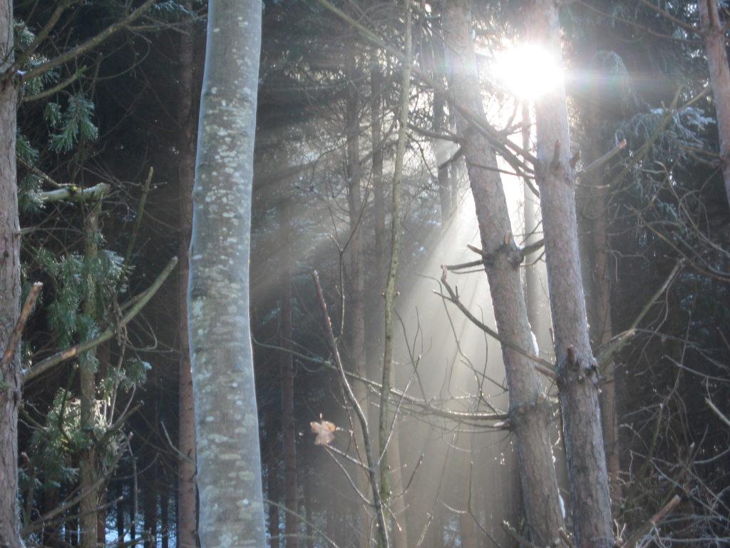 Verantwortung, Blog: Übergewicht, Untergewicht, seelische Sicht, Licht durchflutet den Wald