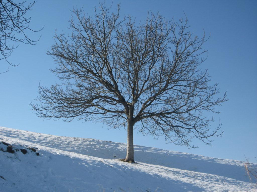Verantwortung, Blog: Übergewicht, Untergewicht, seelische Sicht, Schneebaum