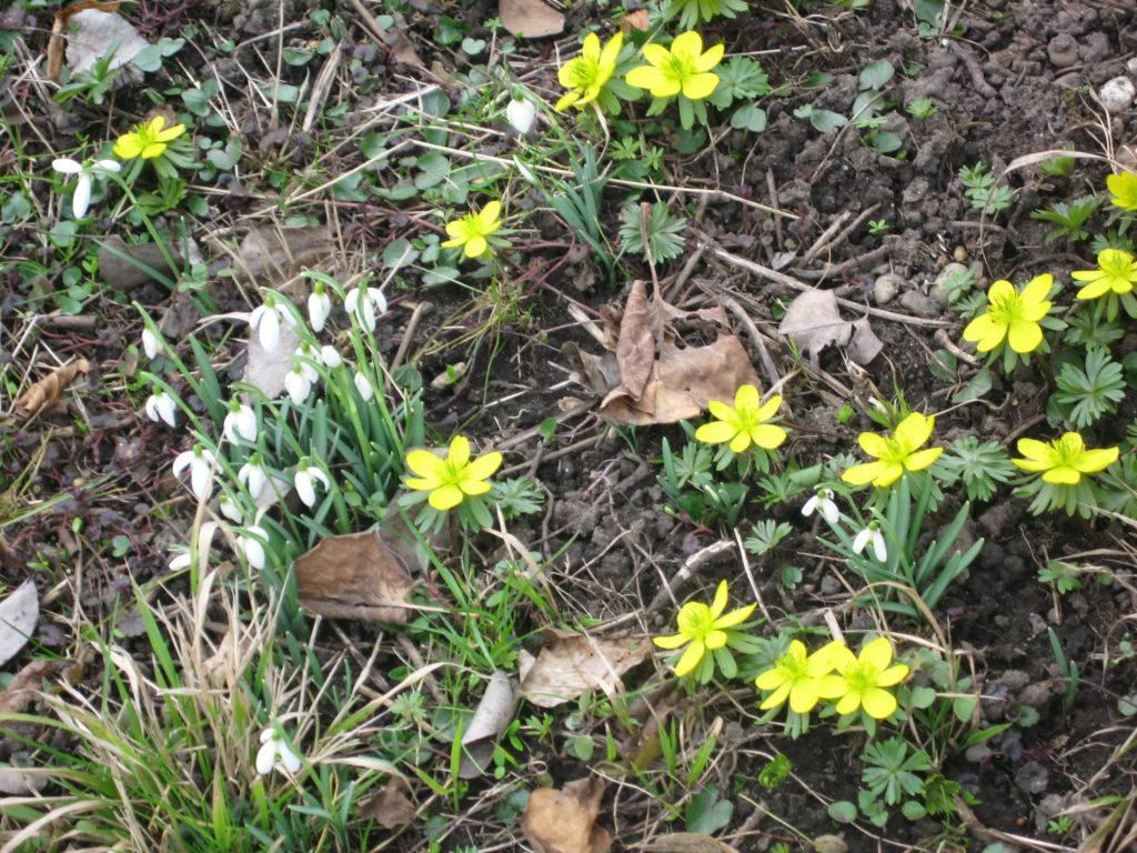 Leben, Blog: Übergewicht, Untergewicht, seelische Sicht, Frühlingsblüher