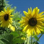 Blog: Übergewicht, Untergewicht, seelische Sicht, Gefühle, Sonnengeschwister