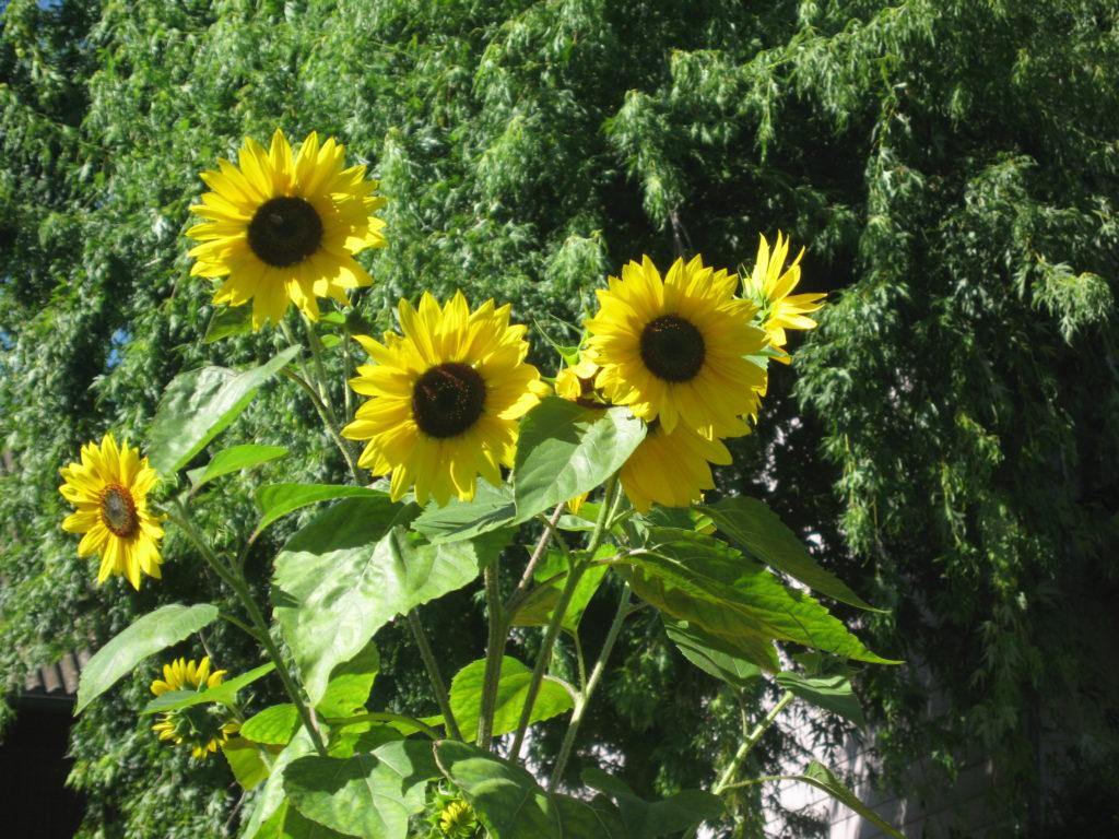 Blog: Übergewicht, Untergewicht, seelische Sicht, Gefühle, Sonnenfamilie