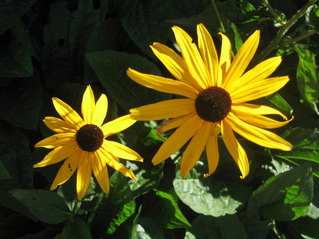 Blog: Übergewicht, Untergewicht, seelische Sicht, Gefühle, erleuchteter Sonnenhut