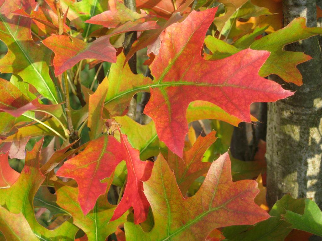 Traum, Blog: Übergewicht, Untergewicht, seelische Sicht, Herbstfeuer