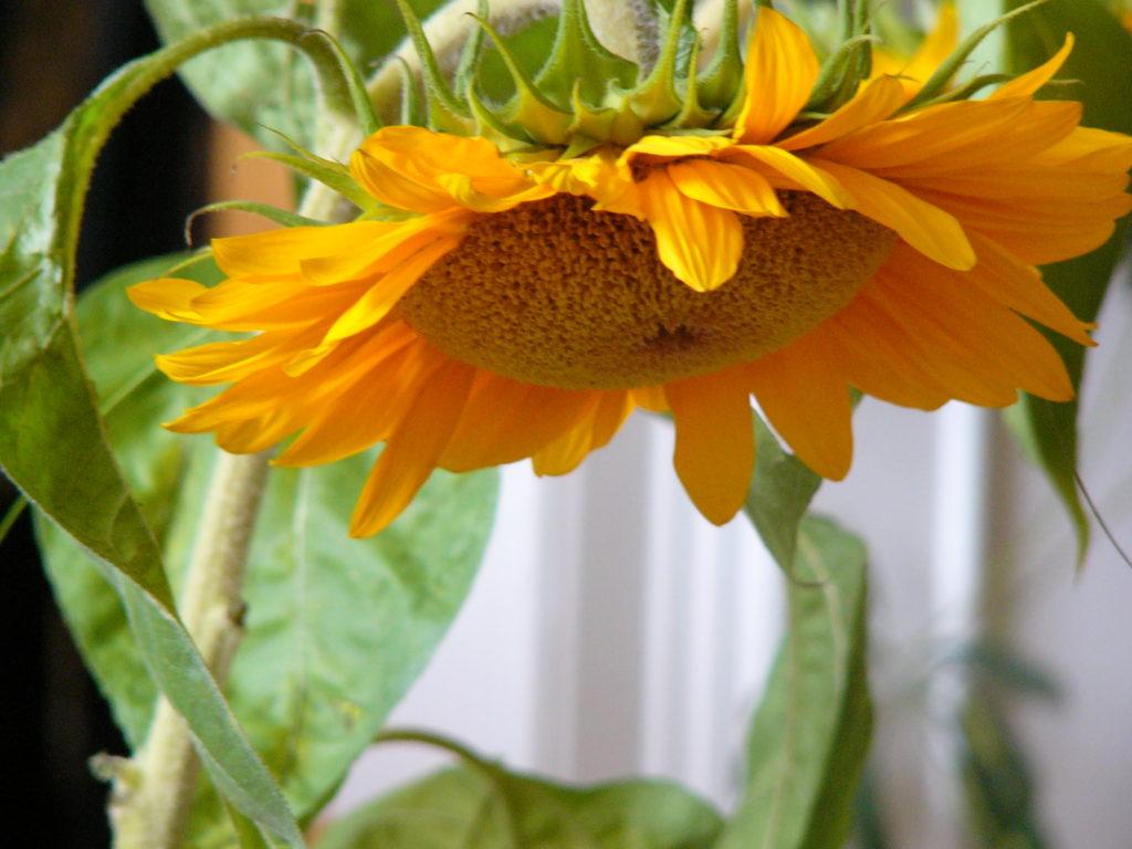 Blog: Übergewicht, Untergewicht, seelische Sicht, Gefühle, reife Sonne