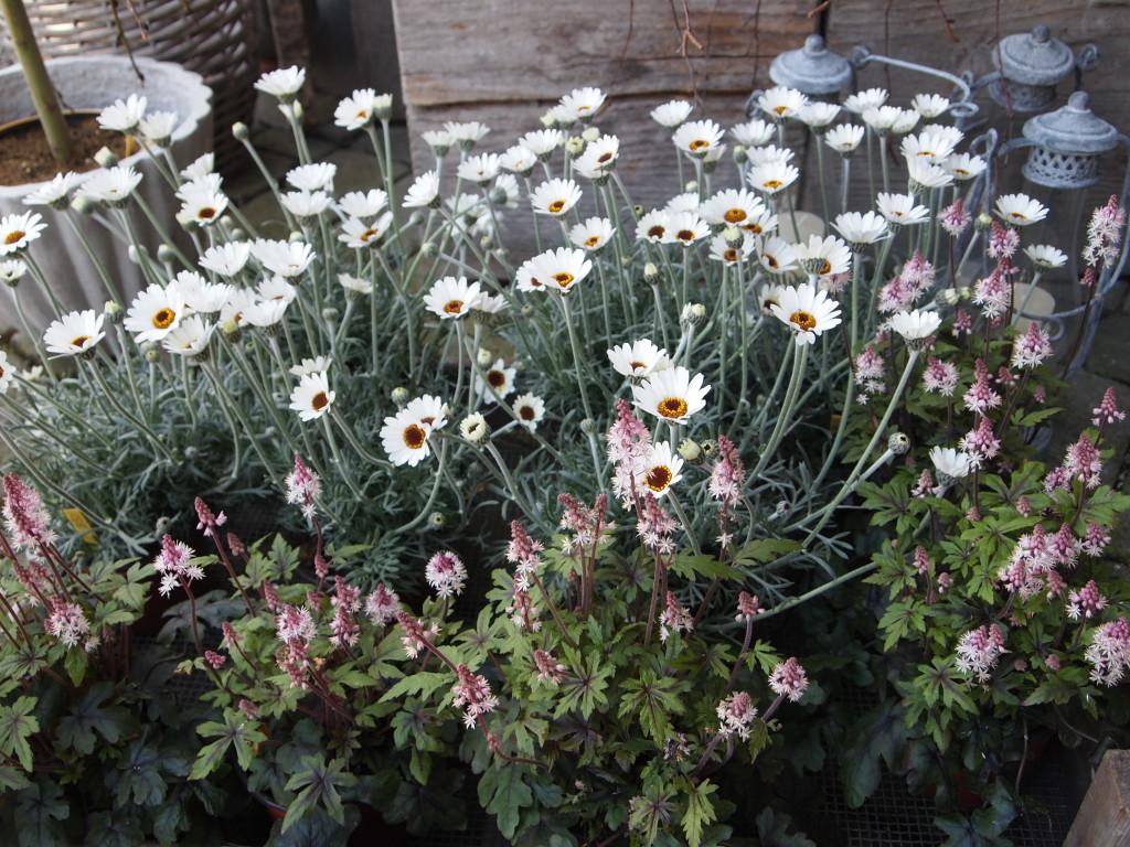 Anderen, Blog Elisabeth Reinhard: Übergewicht, Untergewicht, seelische Sicht, Margareta im Flaum