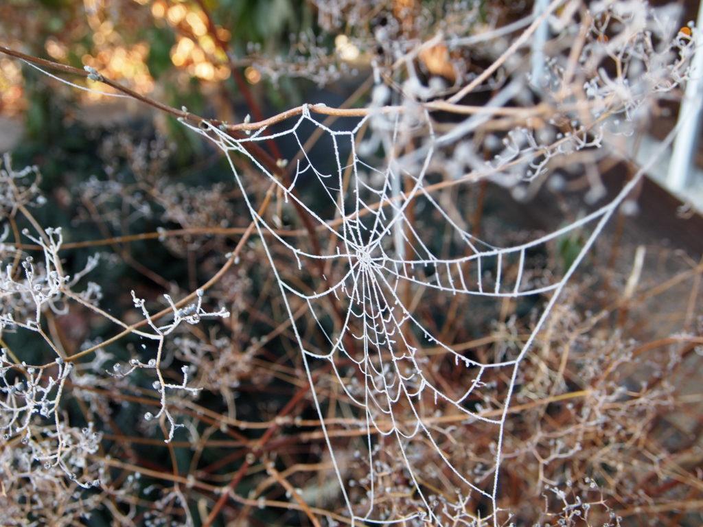 Schmerzkörper, Blog Übergewicht, Untergewicht, seelische Sicht, Spinnennetz