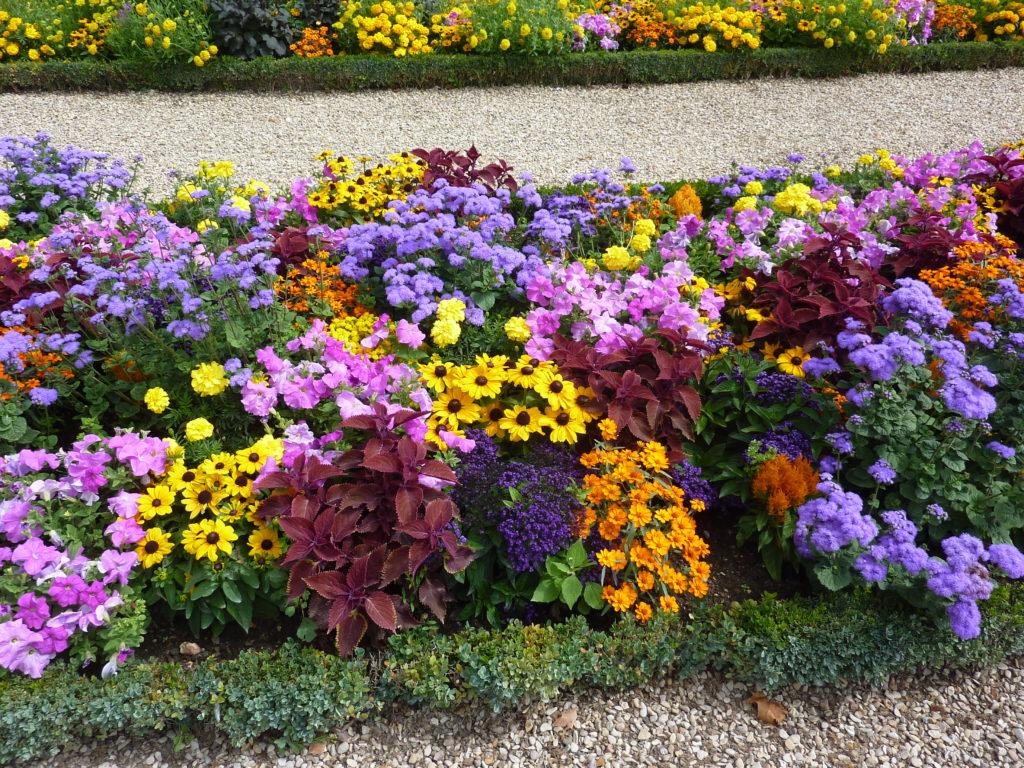 Drama, Blog:Übergewicht, Untergewicht, seelische Sicht Blumenrabatte