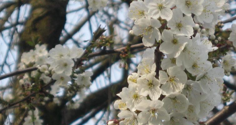 Mitte, Blog: Übergewicht, Untergewicht, seelische Sicht, Blütenzauber